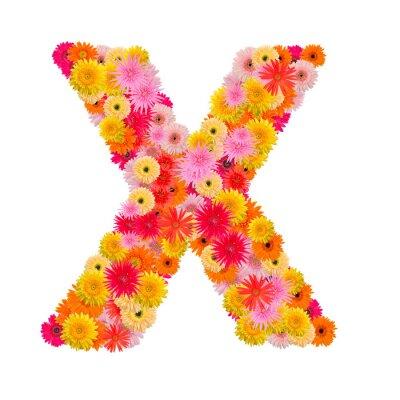 Obraz Litera X alfabet z Gerbera na białym tle