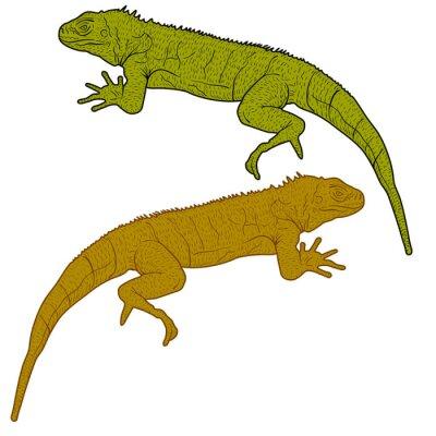Obraz Lizard jest goanna sylwetka na białym tle. ilustracji wektorowych
