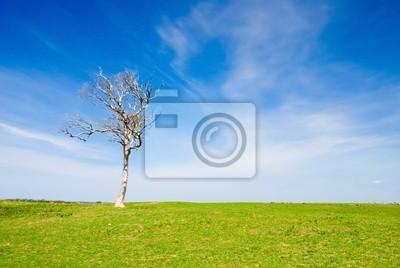 Lone Dead Tree w Paddock