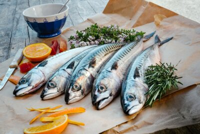 Obraz mackerels