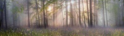 Obraz Magia Karpacki las o świcie