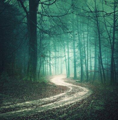 Obraz Magia kolorów jesieni leśnych drogach. Bllue kolorowy marzycielski drzewo las mglisty wsi zielony z likwidacji autostrady tło. Fantasy kolorowe lasy. Efekt koloru filtr.