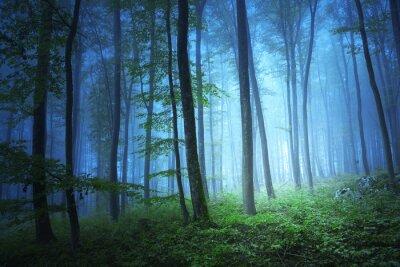 Obraz Magia światła w niebieski kolor las mistycznej