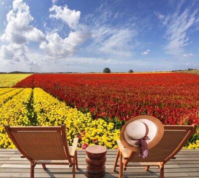 Magnificent garden ranunculus
