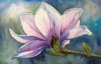 Obraz Magnolia kwiat branch.Watercolors.