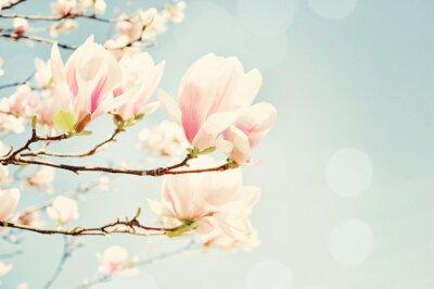Obraz Magnolia kwiat z flary słońca. Płytkie głębi pola.