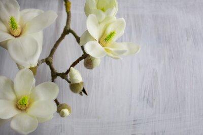 Obraz Magnolia kwiaty