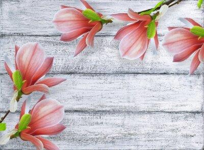 Obraz Magnolia kwiaty na tle shabby drewnianych desek