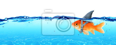 Obraz Małe ryby z ambicjami wielkiego rekina - Business Concept