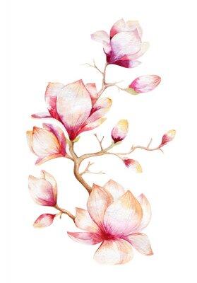 Obraz Malowanie kwiat magnolii tapety. Ręcznie rysowane Akwarela kwiatów