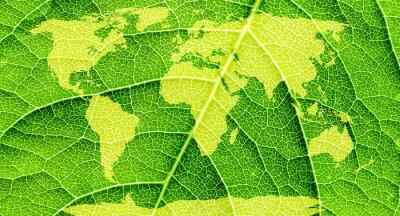 Obraz Mapa świata, kontynenty w tle liścia.
