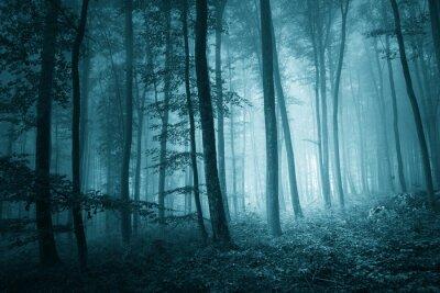 Obraz Marzycielski mistyk niebieski kolor mglisty las