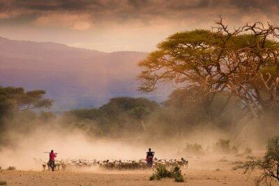Obraz Masai pasterze ze stada kóz og