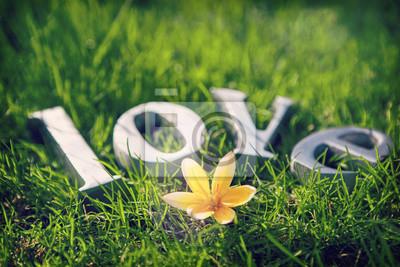 Obraz Metalowe litery pisowni Miłość z małym żółtym tulipanem w trawie wiosną