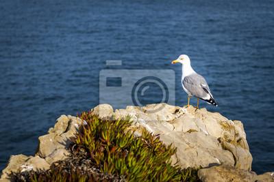 Mewa w skale w portugalskim wybrzeżu, w pobliżu Peniche