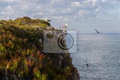 Mewy w klifie w portugalskim wybrzeżu, w pobliżu Peniche