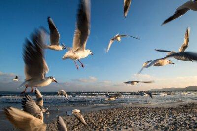 Obraz Mewy w locie Wybrzeże Bałtyckie Binz Niemczech