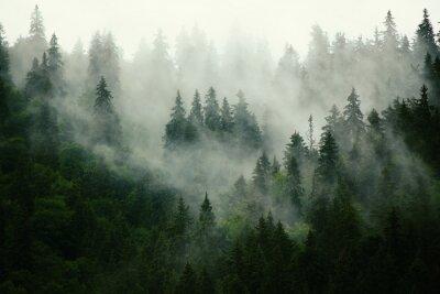 Obraz Misty krajobraz z lasu jodłowego w hipster zabytkowe stylu retro