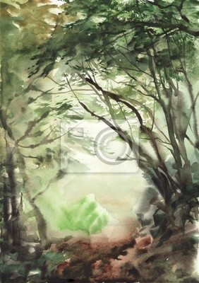 Misty w lesie