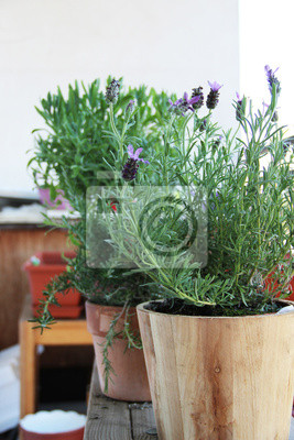 Obraz Mix of herbs in the pot