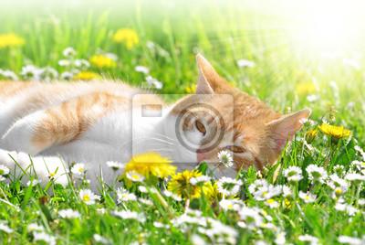 Młody kot w trawie
