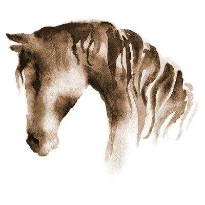 Obraz Mokra Głowa konia akwarela. Ręcznie malowane brązowy koń na białym tle.