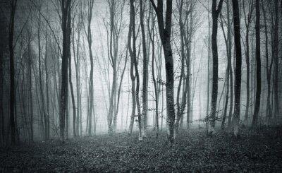 Obraz Monochromatyczne czarno-białe grunge teksturowane kolor mglisty Mistyczna lasu krajobraz drzew.