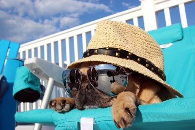 Obraz Mops Relaks w Beach Chair