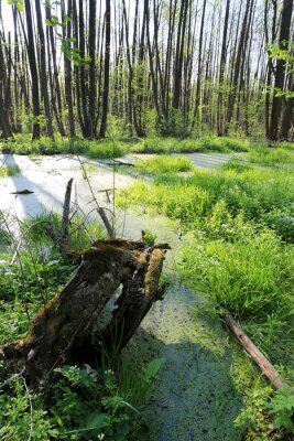 morning scene on bog in forest