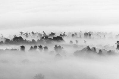 Obraz Morze chmur nad lasem, czerni i bieli w fotografii minimalistycznym