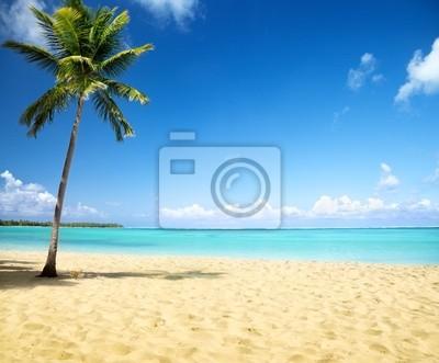 Obraz morze i palmy kokosowe