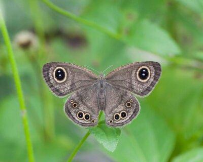 Obraz Motyl