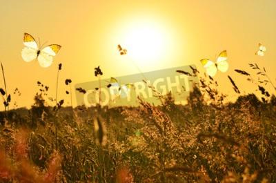 Obraz Motyl i lato łąka