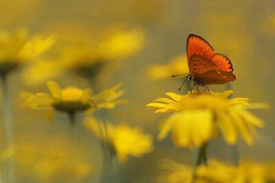 Obraz motyl w ogrodzie