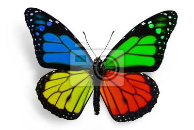 Obraz motyl z fantastycznych kolorach