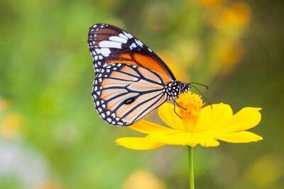 Obraz Motyle i Kwiaty