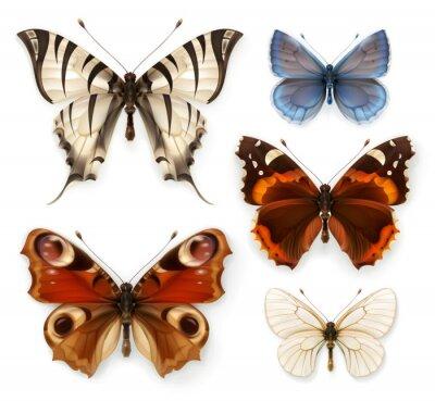 Obraz Motyle, zestaw ikon wektorowych