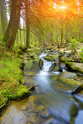 Mountain river in grren forest