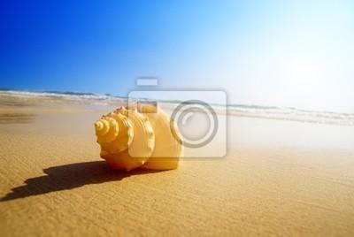 Obraz Muszla i ocean piasek