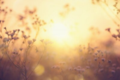 Obraz Nature backdrop. Beautiful Meadow with wild flowers over sunset sky. Beauty nature field background with sun flare. Easter nature backdrop. Bokeh, Silhouettes of wild grass and flowers
