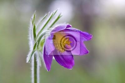 Nice kwiat