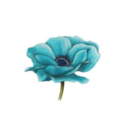 Obraz Niebieski Anemone