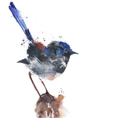 Niebieski ptak niebieski ptak strzyżyk akwarela ilustracja australijski ptak na białym tle