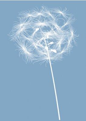 Obraz okrągła pojedyncza biała sylwetka mniszek