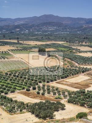 Oliwa z doliny na Krecie