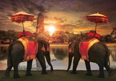 Obraz Opatrunek słoń z królestwa akcesoria tajski tradycja standi