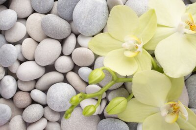 Obraz Orchid.