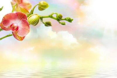 Obraz Orchid kwiat bliska