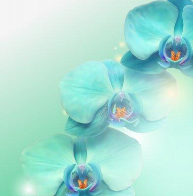 Obraz Orchid kwiat tle