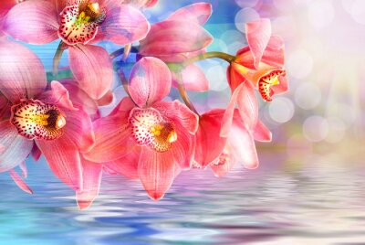 Obraz Orchid kwiat z bliska